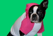 Boston Terriers / This is a collection of adorable pictures of Boston Terrier dogs.  Some come from www.fetchdogfashions.com.  The rest are repins of cute pictures found throughout Pinterest.  #puppy #dog #dogclothing #dogfashion #fashion #design #designer #smallbusiness #entrepreneur #smalldogs #bostonterrier #terrier