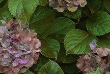 botanical motif inspiration / inspiration for my knitting motifs