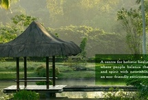 Vegan Travel Destinations / Vegan- friendly + plant based travel destinations.