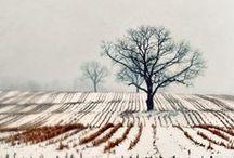 Winter / Skiing, winter fun, beauty of snowy nature