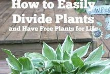Gardening and Laundry / Here are some gardening Tips for gardeners and laundry tips