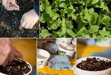 Gardening / Gardening tips and how-to's from old school Italian gardeners