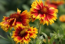 Autumn Blooms / by Darcey