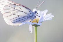 Workshops natuurfotografie / Foto's gemaakt tijdens vlinderreizen. Wil jij dit ook? Kijk op http://judithborremans.com
