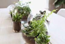 Para Mi Jardín / Tener un jardín funcional, bonito, siempre al día sin mayor esfuerzo.