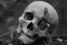 Skulls& bones
