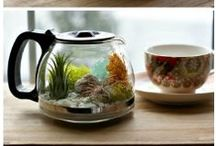 Terrariums / Pick from one of our creations in store or shop supplies in store to make your own! Find everything you need, including garden experts who really know their stuff.