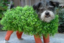 Stylin' it up and Stepping Out / You know you love to dress your pets up.  No judgment here. / by WestVet in Idaho