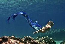 Mermaid Diaries // INSPO