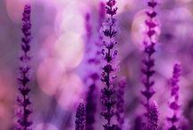 Violet ❤️