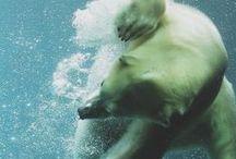 animal kingdom. / by Sanna Danielsson
