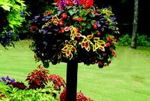 garden inspiration / by Sherry Mikesell