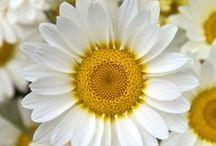 Nature's treasures: Flowers  / by Áhugamálin Mín