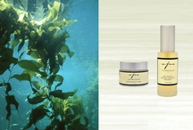 Eco-Lux Spa Products