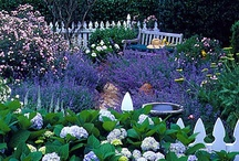 Garden / by Shay Hurlocker