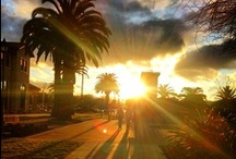 Gorgeous Campus / Take a look at our beautiful campus!  / by Santa Clara University