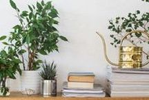 Spring Cleaning / Tips for keeping a non-toxic, beautiful home and you!