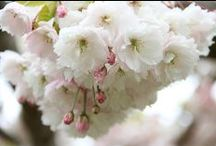 Spring / New Season