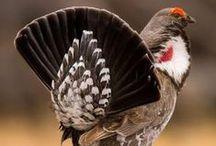 Birds Plumage and pretty tails, feathers, tailfeathers / by Áhugamálin Mín