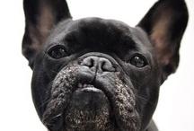 Dogs / Mans best friend  / by Nicolas Perez