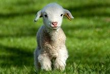 Cute Animals / Aren't these animals adorable?!