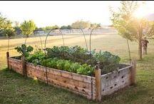 Sodas / Šaunios idėjos Jūsų žaliam sodui ir kiemui.