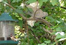 Madarak / Saját madárfotók