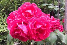 Our garden / Plants e.a. In our garden