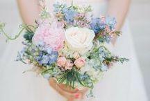 <<Weddings>>
