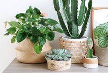 Végétal / Dans la vie, il y a des cactus!