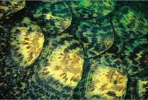 Natural details & close-ups / Détails naturels et gros plans d'animaux, de végétaux, de minéraux... | Detalles naturales y fotografía macro de animales, plantas, piedras...