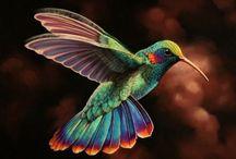 Birds  / by Gina Calesini Kruk