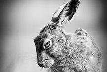 DB ♥ Eläin kuvat / Animal pictures / Inspiraatiota ja iloa eläimistä.