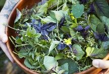 Grow Your Own Salad / From seed to table - tips on growing, harvesting and a few recipes!