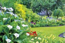 Garden / Optimaal genieten in je tuin. Leuke interessante en originele tuinfoto's, filmpjes en andere dingen die jouw tuin leuk maakt.