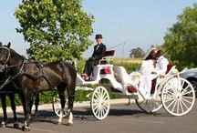 Our White Carriage / White Vis a Vis carriage! By Robert Inc.