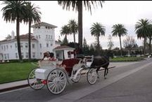 Venues / From busy cities to quiet wineries- ride in style with Hackney Horse & Carriage!