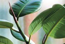 Houseplants / Met planten haal je de tuin en gezelligheid naar binnen, planten geven & kleur in je interieur. Maar een plant is niet alleen mooi om te zien, kamerplanten zorgen ook voor zuurstof en in veel gevallen ook voor schone lucht in jouw woning.
