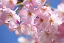 Lente op terras en balkon / Breng kleur aan op je terras of balkon met mooie violen, primula's of ander voorjaarsbloeiers.