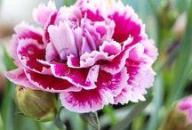 Flores, Flowers / Flores, Arranjos,  / by Cris Gomez