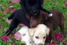 Animal world _ allatok vilaga vegyesen / mixed pets - allatok vegyesen