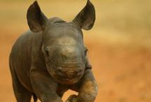 Our beautiful rhinos! / Pics of what we are all about!