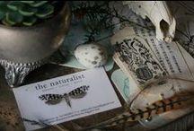 ᗰἰʂʂ Darwin 'ʂ cσʈʈαɠє / NaTuRaL HiSToRy & BoTaNy