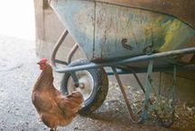 ℒily ᗰαε'ʂ Farm | Blue&Brown