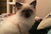 Leoś - a cat who stole my heart