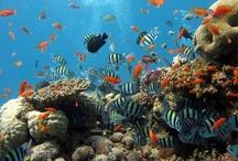Egypte - Egypt / De mooiste resorts en hotels in Egypte! Voor meer info kijk op www.tjingo.nl/egypte #egypte #hotels #vakantie #tjingo