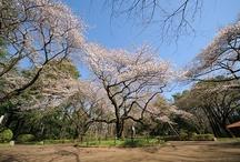 Koganei Park / 小金井公園 / http://www.tokyo-park.or.jp/park/format/index050.html
