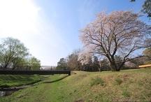 Nogawa Park / 野川公園 / http://musashinoparks.com/kouen/nogawa/