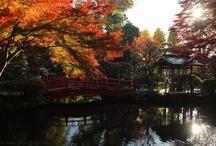 Nukui Shrine / 貫井神社