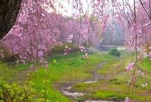 Nogawa River / 野川